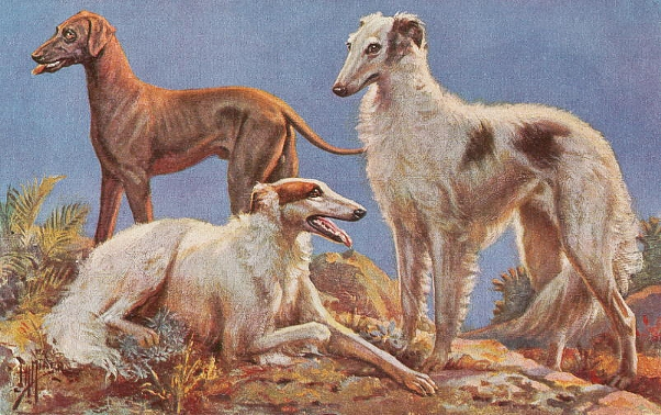 russian_wolfhounds_and_rampur_ngs.jpg